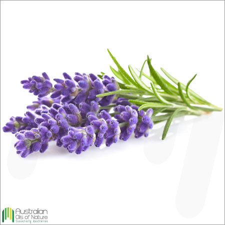Lavender Absolute Oil
