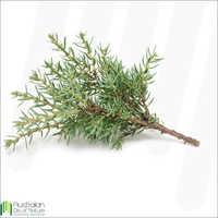 Blue Cypress Essential Oil