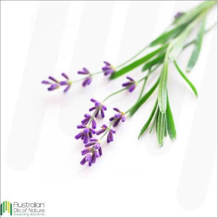 Lavender (Australian) Essential Oil