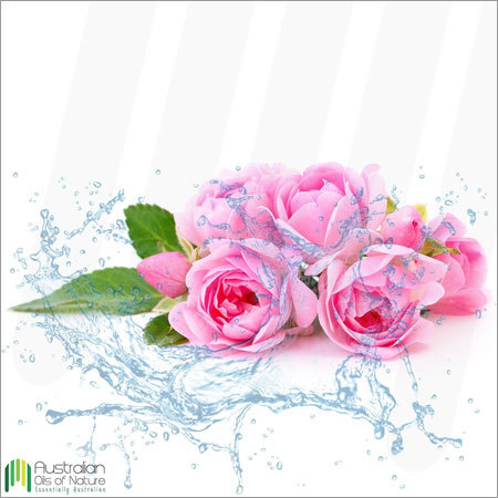 Rose Water Essential Oil