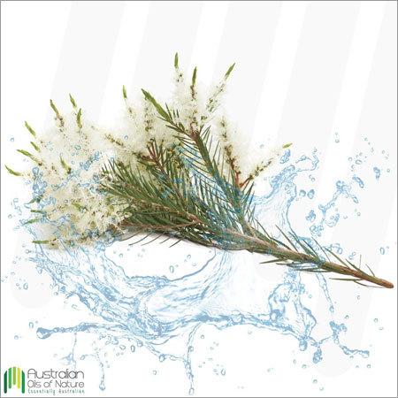 Tea Tree Water Essential Oil