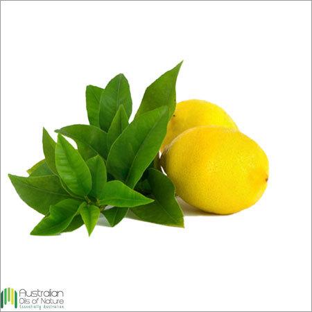 Citrus Verbena Essential Oil