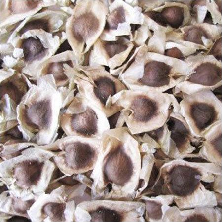 Moringa Seeds Kernel
