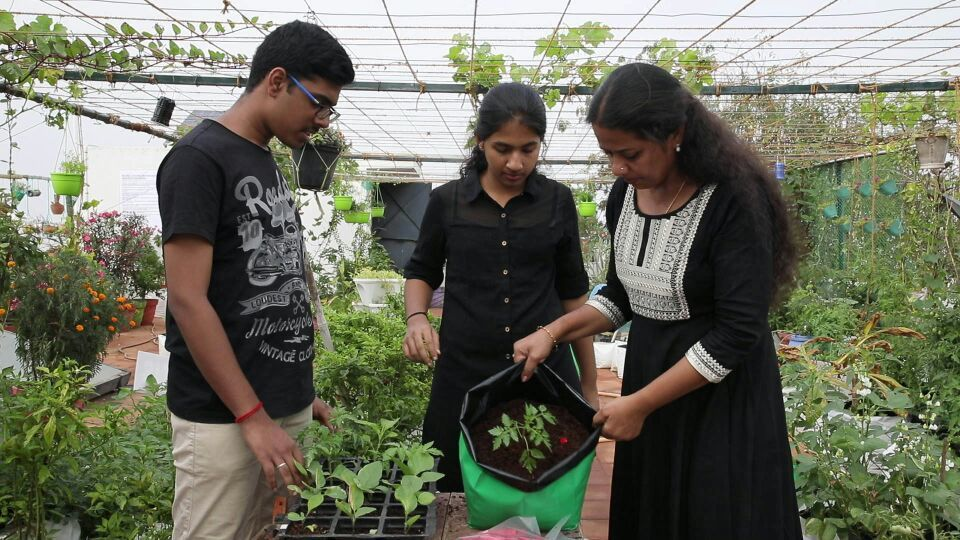 Plant Nutri Pellet