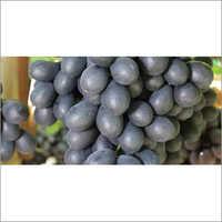 Sweet Jubilee Grapes