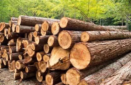 Ghana Teak Wood Manufacturer, Supplier, Wholesaler in Delhi