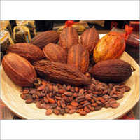 Cocoa West Africa