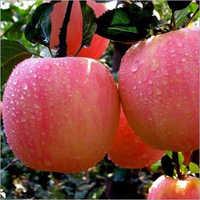 Fresh Kashmir Apple