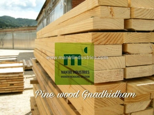 new zealand pine wood supplier in Gnadhidham