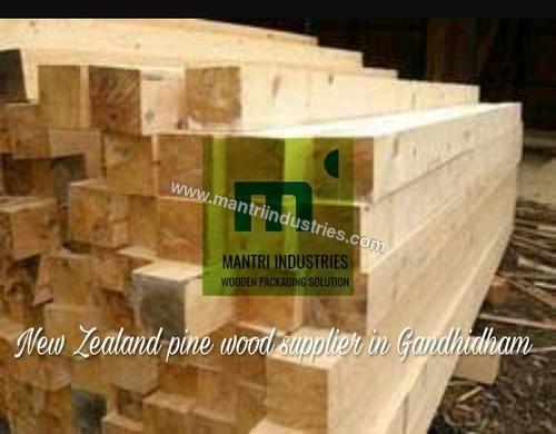 Pine wood gandhidham