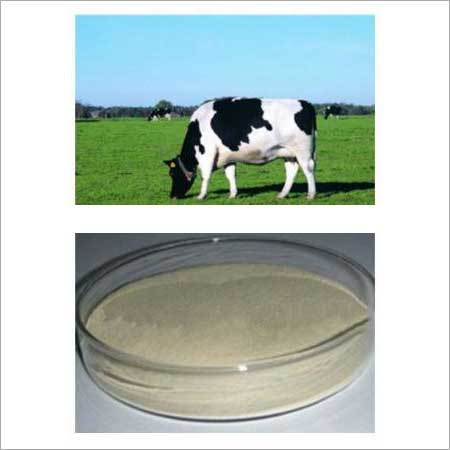 Yeast Protein Powder For Cattle