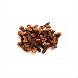 Lavang(Clove) extract