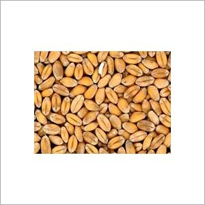 Wheat Protein Extract