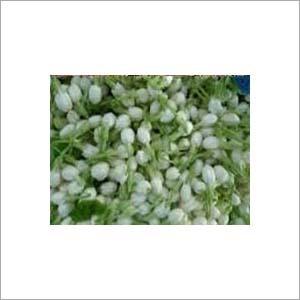 Jasmine Extract