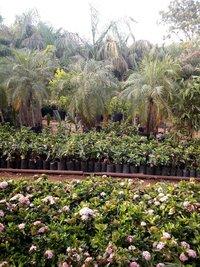 Artificial Plantation Service