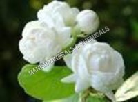 Beauty Water Soluble Fragrance