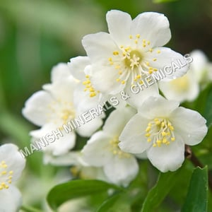 Jasmin Touch Water Soluble Fragrance