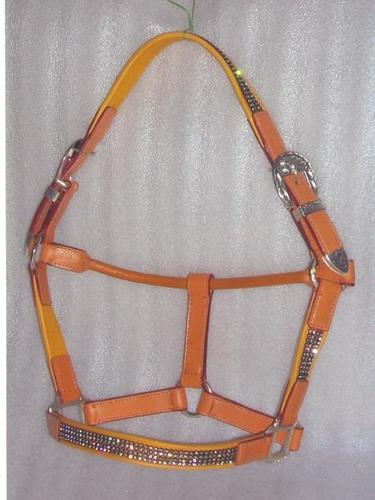 Colored Horse Halter