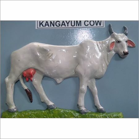 Kangayum Cow Model