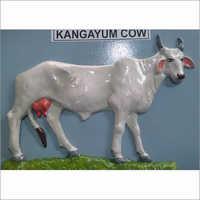 Kangayum Cow Model