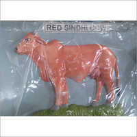 Red Sindhi Cow Model