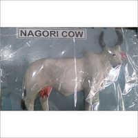Nagori Cow Model