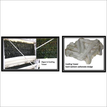 Green Algae & Scales Removing Solvent