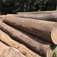 Round Sal Wood Log