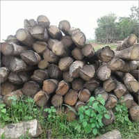 Gmelina Wood Log