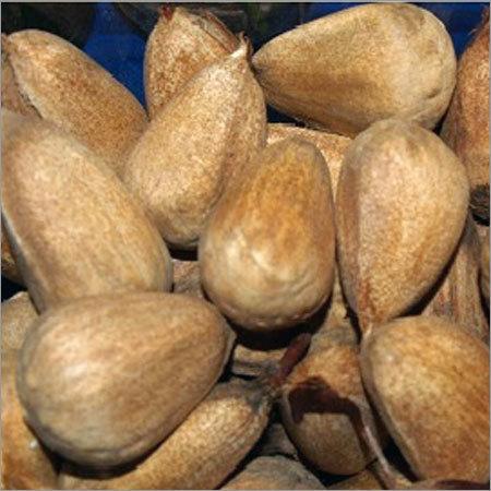 Bunya Nut
