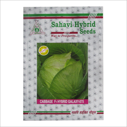 Cabbage F1 Hydrid Galaxy 075