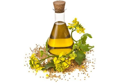 Fennel Extract liquid
