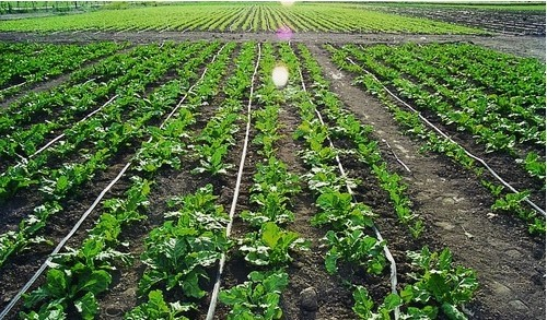 Agriculture Irrigation Systems