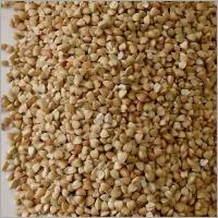 SCO, Buckwheat, Green Groats, UA