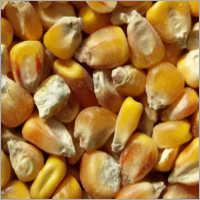 SCO, Yellow Corn, LKA