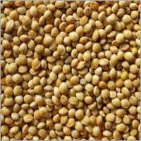 SCO, White Millet, UA