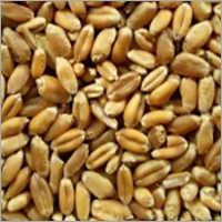 SCO, Milling Wheat, 11.5, UA