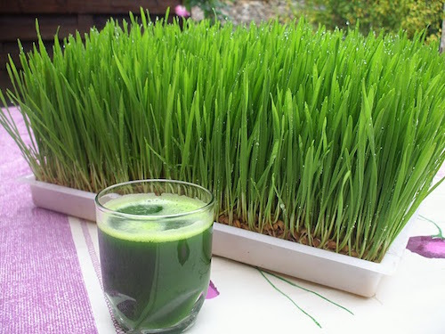 Wheat grass Extract liquid