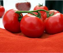 Natural Dried Tomato Powder