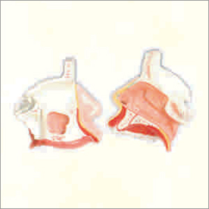 Nasal Cavity Model
