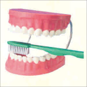 Tooth Hygiene Set  with Brush