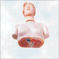 Basic CPR Manikin (Half Body)