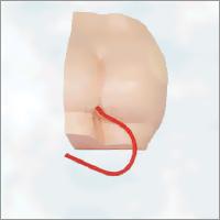 Magnified Uterus Model