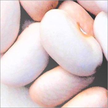 Kidney Bean (Harshil)
