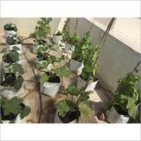 Plant Cultivation Services