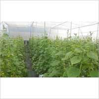 Commercial Hydroponic Consultation & Service