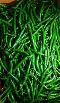 Green Chillies