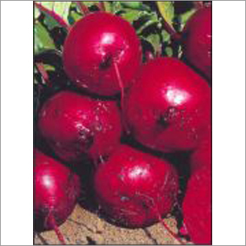 Red Ruby - Beet Root (Open Pollinated) Seeds