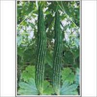 Jhalar - Bittergourd (Hybrid) Seeds
