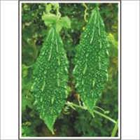 Vatsa - Bittergourd (Hybrid) Seeds